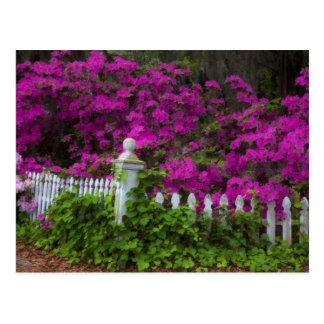 Azaleas en la primavera en la isla histórica de la postal