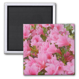 Azaleas in Bloom Magnet