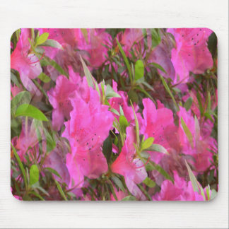 Azaleas in Pink.... Mouse Pad