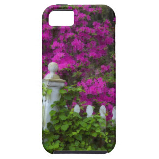 Azaleas in the spring at Historic Isle of Hope iPhone 5 Case