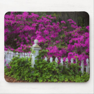 Azaleas in the spring at Historic Isle of Hope Mouse Pad