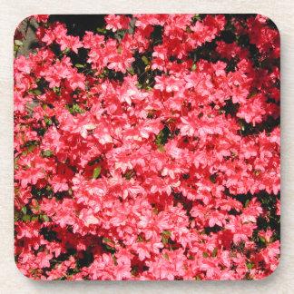 Azaleas. Lots of Pretty Pink Flowers. Beverage Coasters