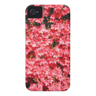 Azaleas. Lots of Pretty Pink Flowers. iPhone 4 Cover