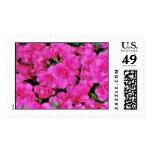 Azaleas Postage Stamp