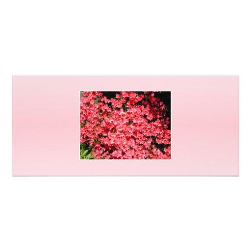 Azaleas. Pretty Pink Flowers. Rack Card