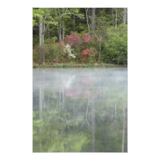 Azaleas relfecting in a pond during early photo