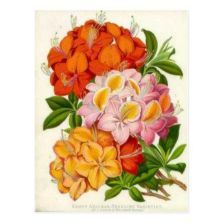 Azaleas resistentes de sir José Paxton Tarjetas Postales