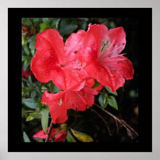 Azaleas rojas poster