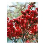 Azaleas rojas y significado postales