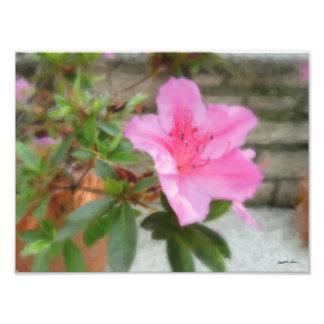Azaleas rosadas 1 cojinete