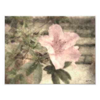 Azaleas rosadas 1 vintage fotografía