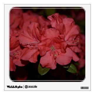 Azaleas rosadas bonitas