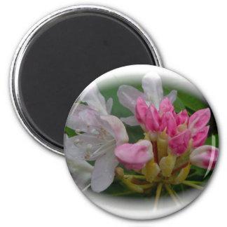 Azaleas rosadas delicadas imán de nevera