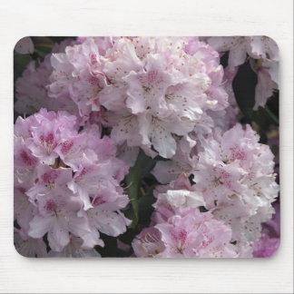 Azaleas rosadas, flores del jardín del rododendro alfombrilla de raton