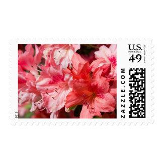 Azaleas rosadas hermosas estampilla