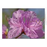 Azaleas rosadas tarjeta de felicitación