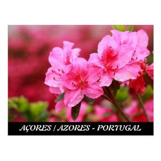 Azaleas rosadas postal
