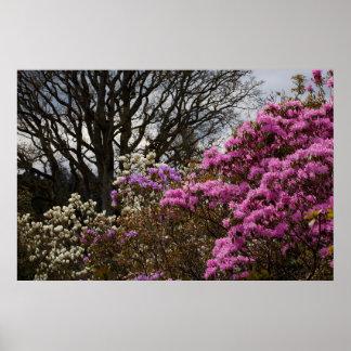 Azalia y magnolia impresiones