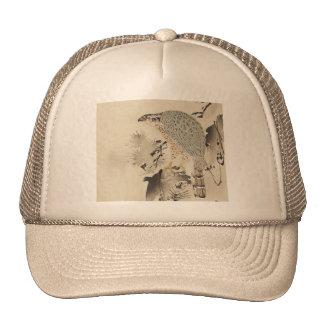 Azor asiático - 1890 gorras