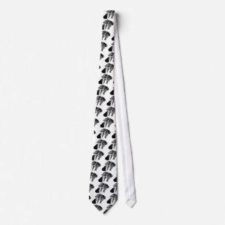 Azor septentrional corbata