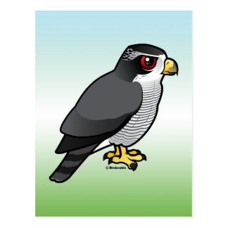 Azor septentrional tarjeta postal