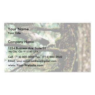 Azor septentrional tarjetas de visita
