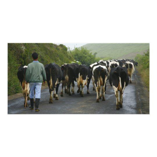 Azorean farmer card