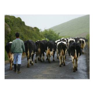 Azorean farmer postcard