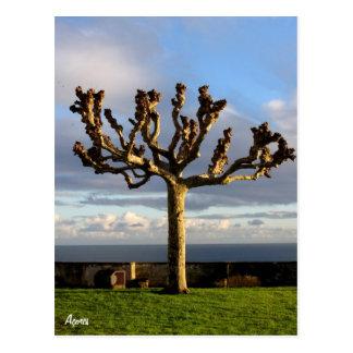 Azores Postcard-Ermida da mae de Deus