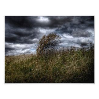 Azotado por el viento fotografias