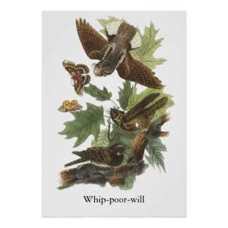 Azote-pobre- Juan Audubon Posters