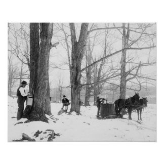 Azúcar de arce de Vermont Camp, 1906 Poster
