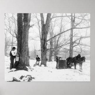 Azúcar de arce de Vermont Camp, 1906 Póster