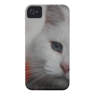 Azúcar iPhone 4 Protectores