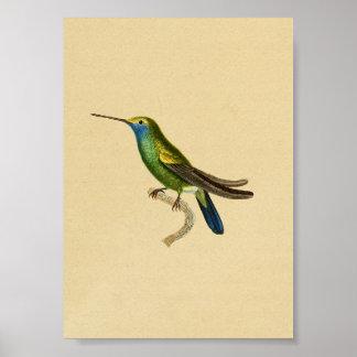 Azul 1830 del amarillo de la impresión del colibrí póster