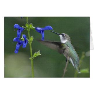 Azul 2 del zafiro del salvia del pájaro del tarjeta de felicitación