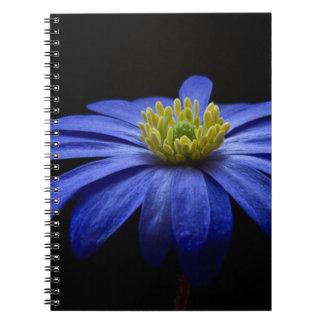 Azul balcánico de la flor de la anémona libreta espiral