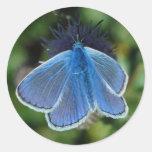 Azul común de la mariposa en los pegatinas del pegatina redonda