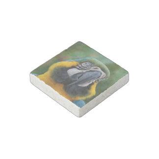 Azul de Cheeked y Macaw rechonchos del oro Imán De Piedra