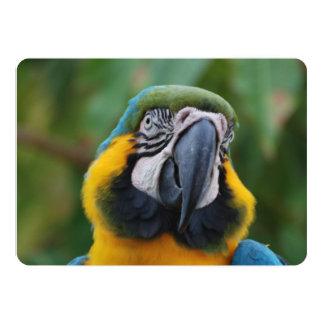 """Azul de Cheeked y Macaw rechonchos del oro Invitación 5"""" X 7"""""""