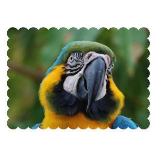 Azul de Cheeked y Macaw rechonchos del oro Invitación 12,7 X 17,8 Cm