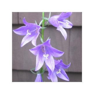 Azul de la flor de la planta de jardín del lona envuelta para galerías