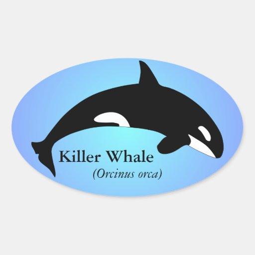 Azul de la pendiente de la orca de la orca calcomania de ovaladas