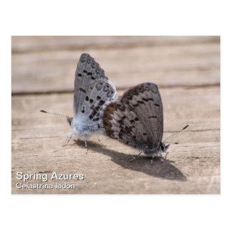 Azul de la primavera tarjeta postal