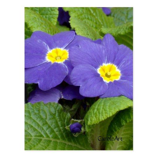 """""""Azul de la primavera """" Tarjetas Postales"""