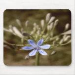 azul del agapanthus alfombrillas de ratones