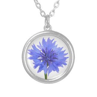 azul del cornflower collar plateado