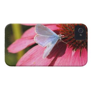 azul del eros en la flor rosada iPhone 4 funda