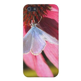 azul del eros en la flor rosada iPhone 5 funda