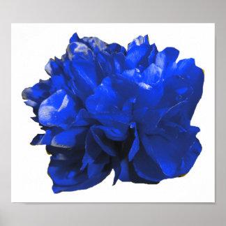 Azul del estallido de Camelia Póster